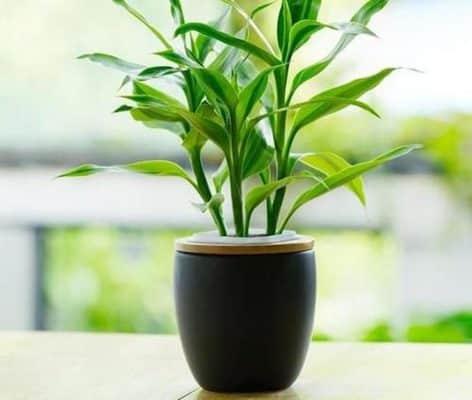 các loại cây trồng phong thủy trong nhà hợp tuổi 9