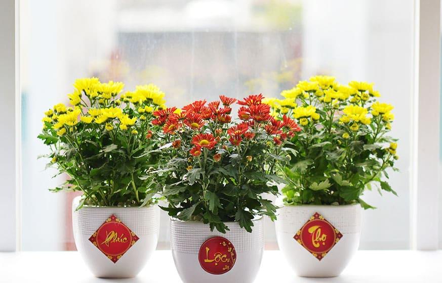 hoa nên cắm khi về nhà mới
