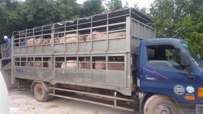 quy định vận chuyển gia súc 3