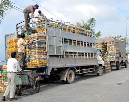 quy định vận chuyển gia súc 5
