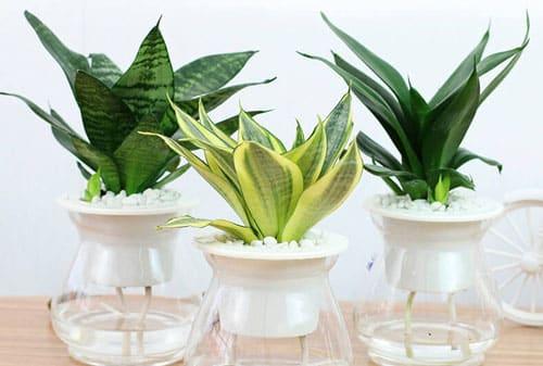 trồng cây phong thủy trong nhà theo tuổi