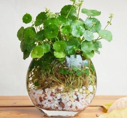 các loại cây trồng phong thủy trong nhà hợp tuổi 6