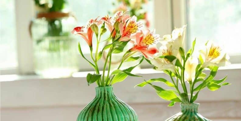 Những loài hoa để bàn làm việc theo phong thủy 6