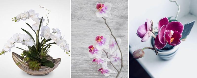 Những loài hoa để bàn làm việc theo phong thủy 2