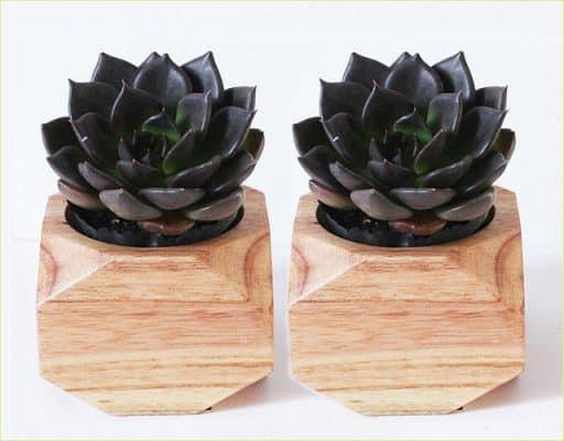 Những loài hoa để bàn làm việc theo phong thủy 11
